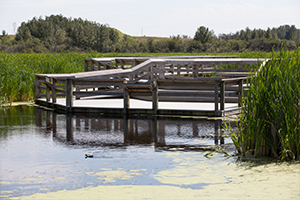 Viewing deck on wetland