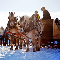 Horses pulling wagon on snow at Fire and Ice Festival