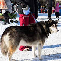 Dog at Fire and Ice Festival