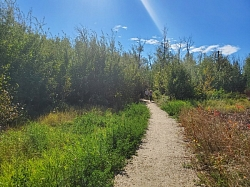 Trail in Coal Mine Park