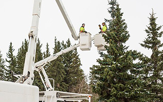 Tree Maintenance in St. Albert